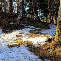 С зимой прощаются леса... :: Лесо-Вед (Баранов)
