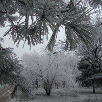 снежный морок :: ли мирон