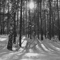 Ещё о зиме............. :: Татьяна Аистова