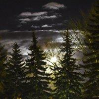 Лунный вечер :: юрий Амосов