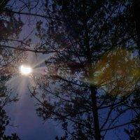 Частичное солнечное затмение  видимое в Шумилино 20.03.2015 в 13-08. :: Анатолий Клепешнёв