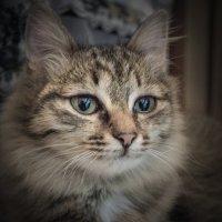 Кошечка 2 :: Дмитрий Кошкаров