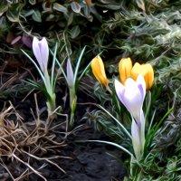 Я слышу музыку весны... :: Валентина ツ ღ✿ღ