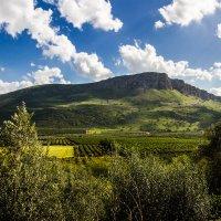 Весна в Галилее :: Леонид Лившиц