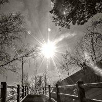 мартовское солнце :: Galina