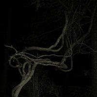 Танец в ночи. :: Валерия  Полещикова