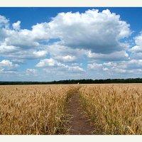 ....по сторонам дорожки  полевой..... :: георгий петькун