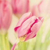 Весна :: Алина