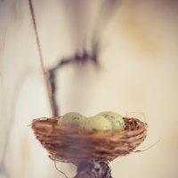 гнездо :: лина сергеева