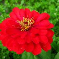 Аленький цветочек. :: ТАТЬЯНА (tatik)