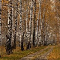 осень...... :: Olenka