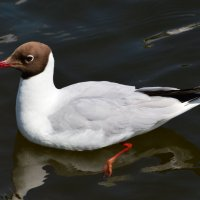 Чайка :: Алексей Жуков