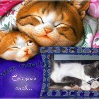 ************************ :: Татьяна и Александр Акатов