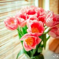 Тюльпаны :: Roman Rez
