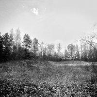 Лес :: Виктория Власова