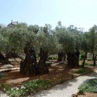 В Гефсиманском саду. :: Чария Зоя
