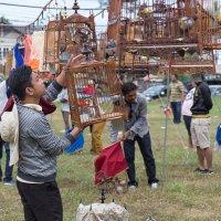 Конкурс певчих птиц в Тайланде :: Ирина Буланова