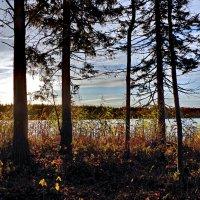Даниковское озеро :: Валерий Талашов
