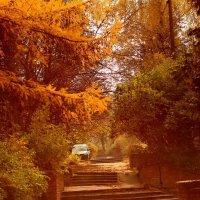 Золотая осень :: Андрей Михайлин