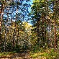 осень в лесу :: Наталья Ивашевская