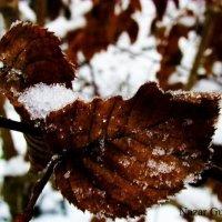 Засніжений листок... :: Nazar Guziy
