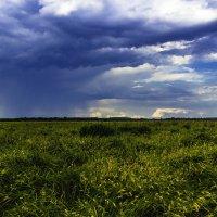 Травы,травы,травы... :: Виктор