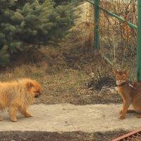 """""""Вот вроде собака умное животное, а этот..."""" :: Наташа Шамаева"""