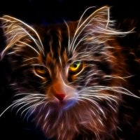 Норвежская лесная кошка :: Денис Бажан