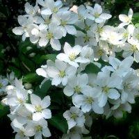 Весна :: Елена Семигина