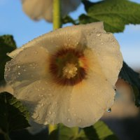 Капелька летнего тёплого дождя... :: Mariya laimite