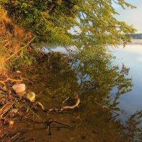 Летний рассвет на озере :: sergej-smv