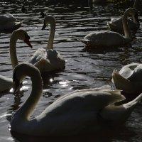 лебединое озеро :: Katrina ☆