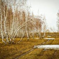 Последний снег :: Александр Литовченко