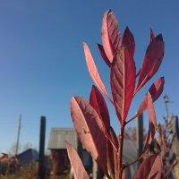 Осень :: Таша Нау