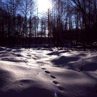 Снег и солнце... :: Носов Юрий