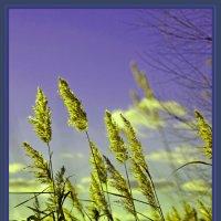 взгляд из травы... :: Надежда Шемякина