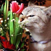 Мартовский кот :: Мария Вологжанина