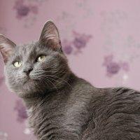 Кот в задумчивости :: Ксения Пискунова