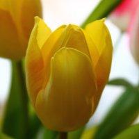 Весна! :: Мария Юртаева
