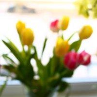 тюльпаны :: Мария Юртаева