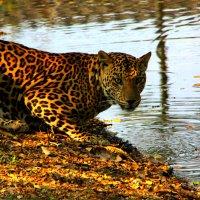Зоопарк в Бангкоке :: Oleg Gendelman