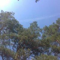 небо в лесу :: Таша Нау