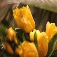 запахи весны :: Лада Котлова
