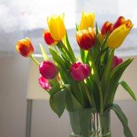 Тюльпаны :: Irina Evushkina