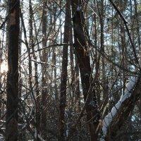 зимняя лесная сказка :: дмитрий гапеев