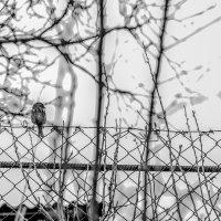 Alone :: Dmitry Zhukov