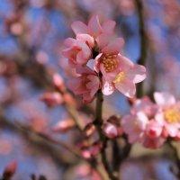Весна! :: Марина Дегтярева