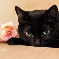 Восьмимартовская кошка :: Екатерина Тарасова