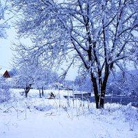 Долгожданный снег :: Ольга Решетникова