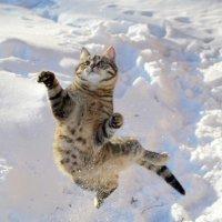 Эх, мне бы на ворота! :: Анна Румянцева